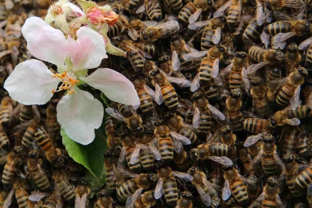 Bee First Beekeeping