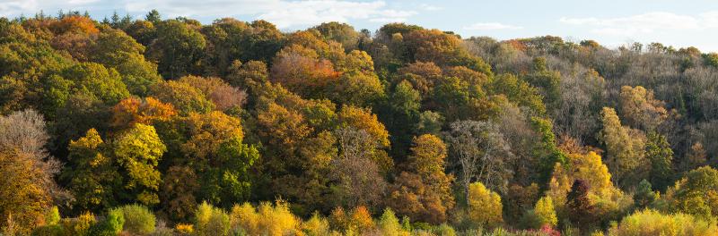 autumn-woodland-panorama-sml
