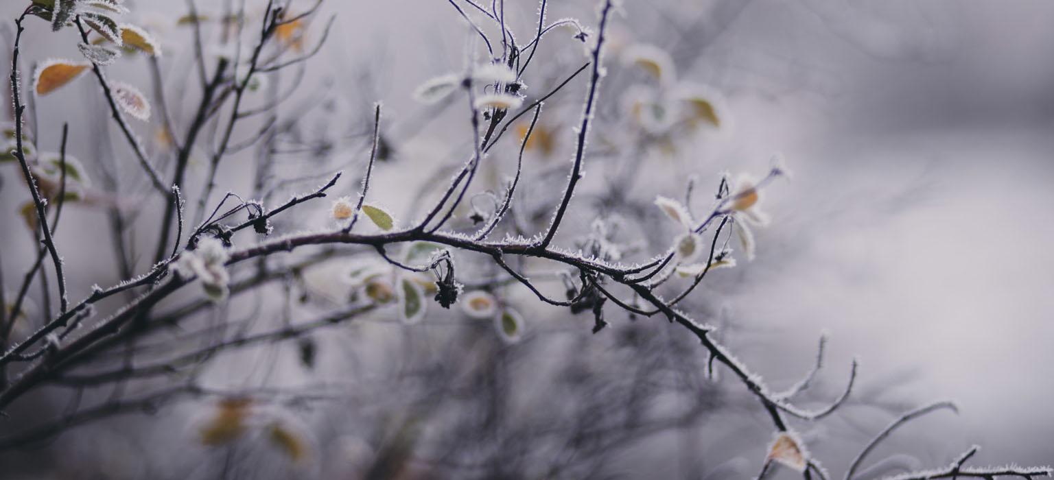 winter solstice weekend