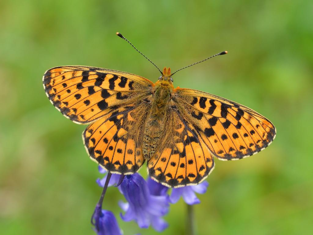 Join in on this year's Big Butterfly Count!